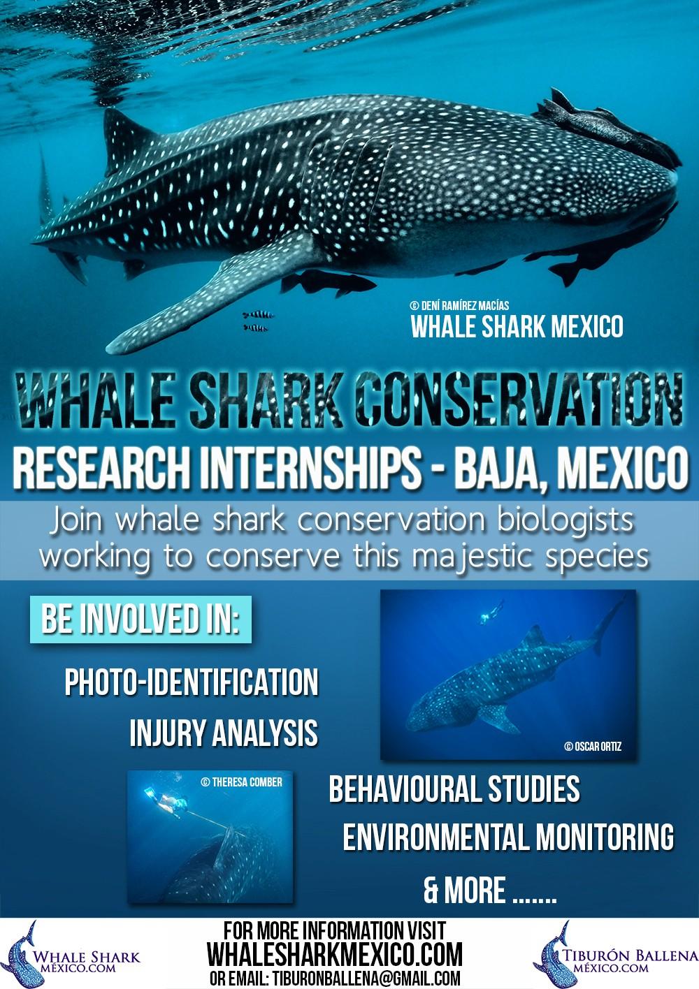 Flyer Whale Shark