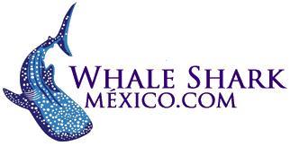 Tiburón Ballena México - Whale Shark México