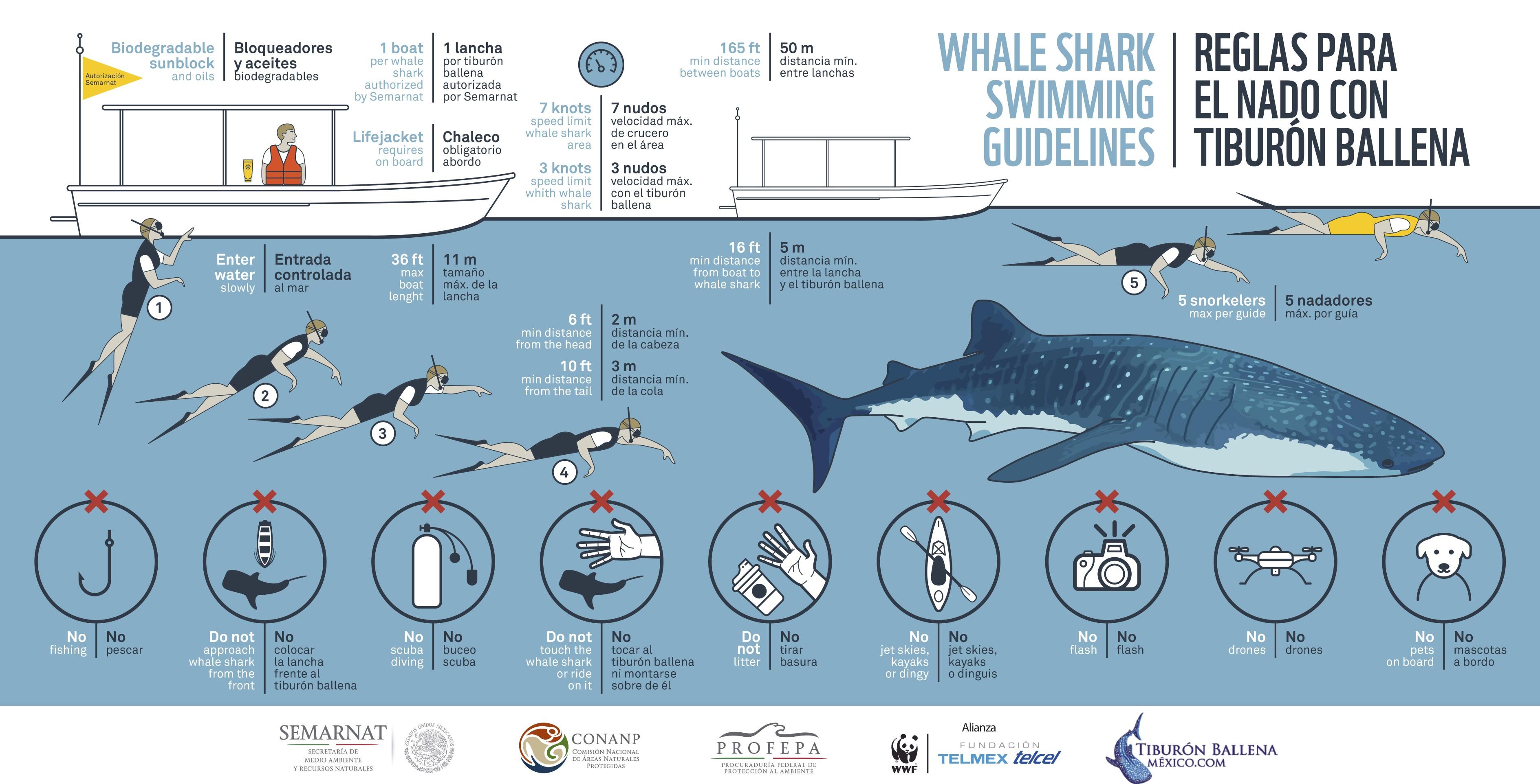 Regeln für das Schnorcheln mit Walhaien